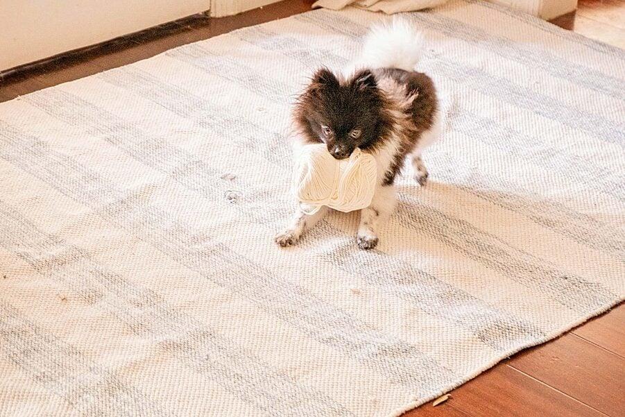 A dog on a rug in front of a door with a ball of yarn in it's mouth.